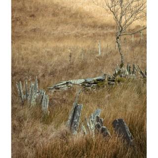 Snowdonia 23