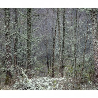 Snowdonia 42