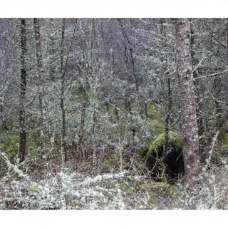 Snowdonia 44