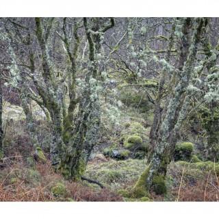Snowdonia 46