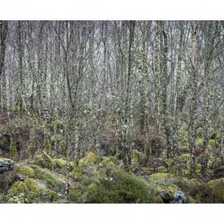 Snowdonia 49